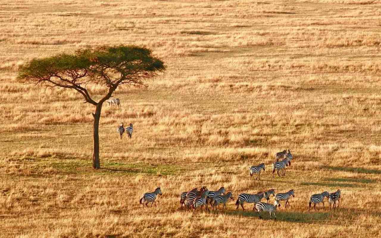 Kenya safari de lujo