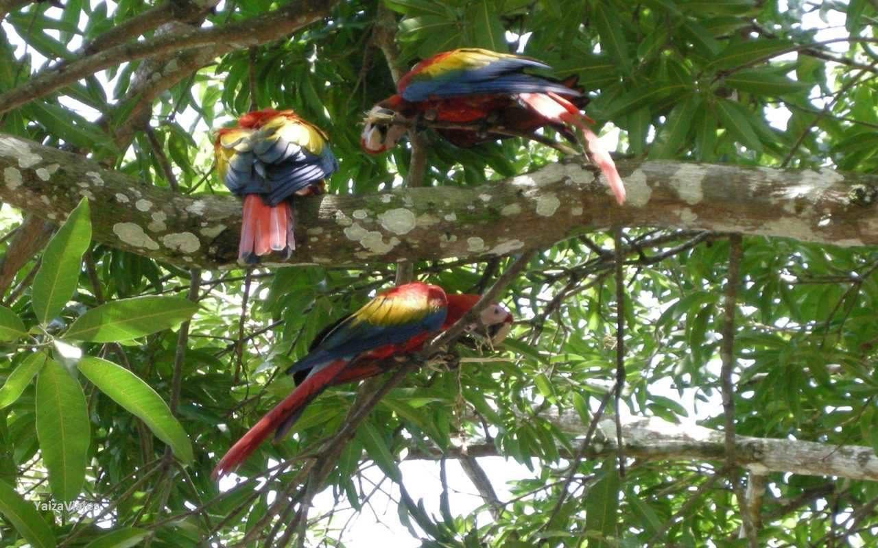Costa Rica Grandes Viajes