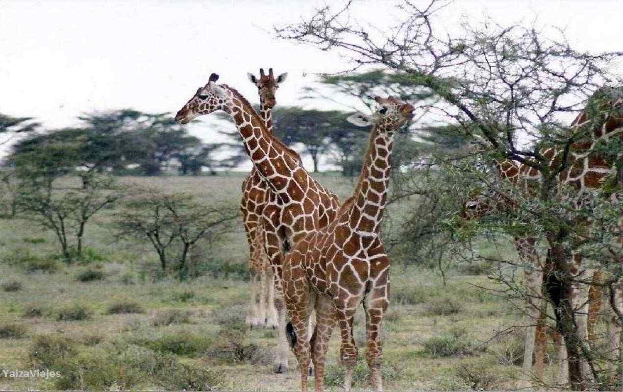 Kenya. Yaiza Viajes