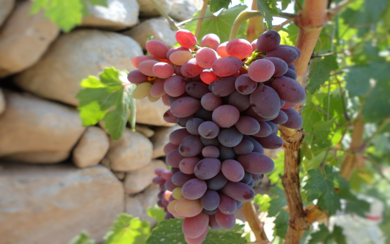 Wine Oil Spa Villa Laguardia